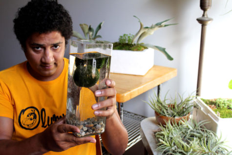 J. Matthis Helmick, owner of Plant Mode, holds a jar of Marimo within the business's current location in downtown Champaign on Saturday.