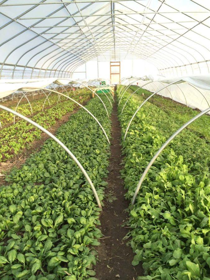 The Sustainable Student Farm operates year-round to bring fresh produce to University Dining, from growing in the high tunnels during winter to growing in the farm's fields during summer.