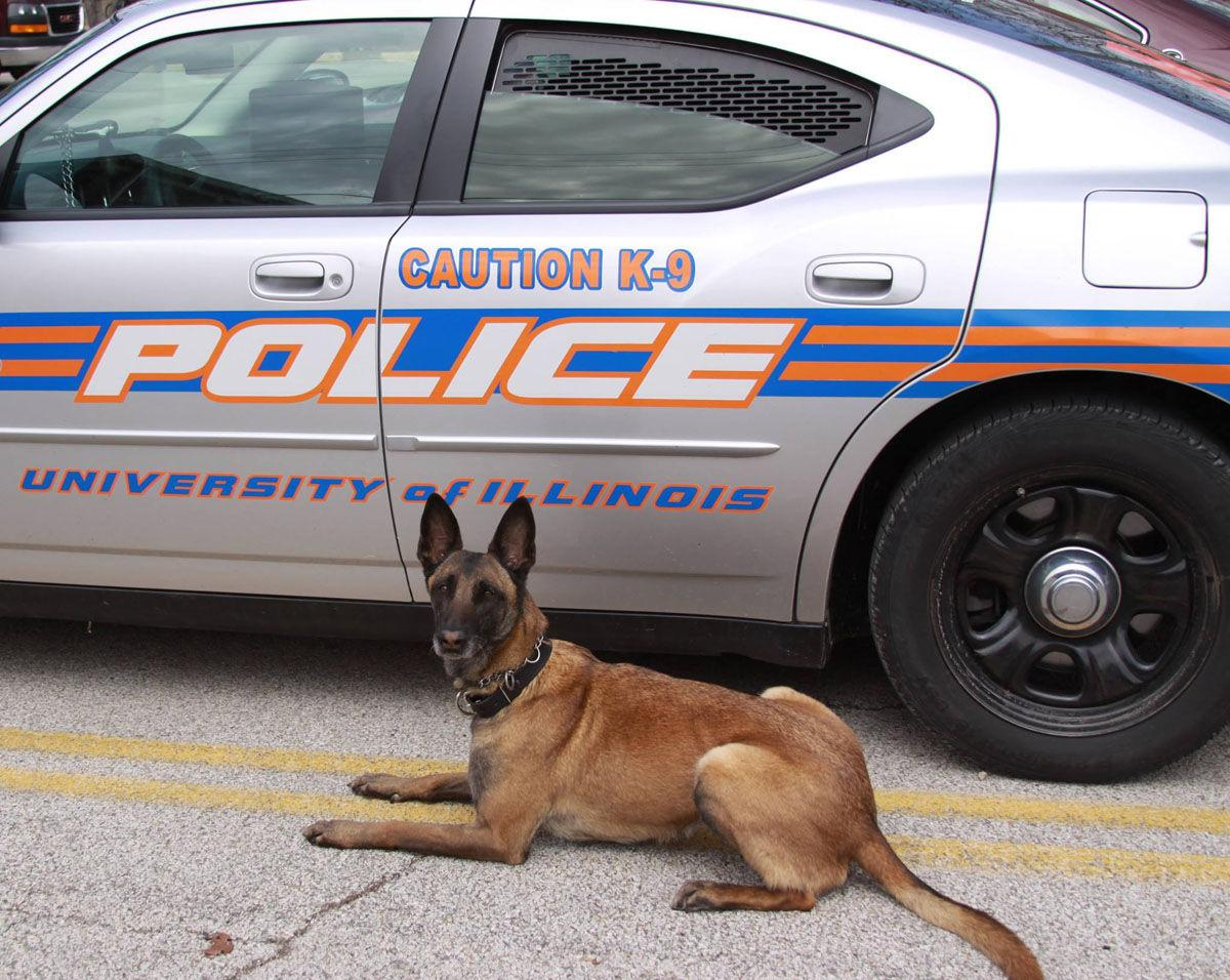 Nala, the EOD K-9 for University Police, was put to rest last month after suffering from a genetic nerve disease. Nala used to sweep areas before school events to make sure the area was free from any explosives.