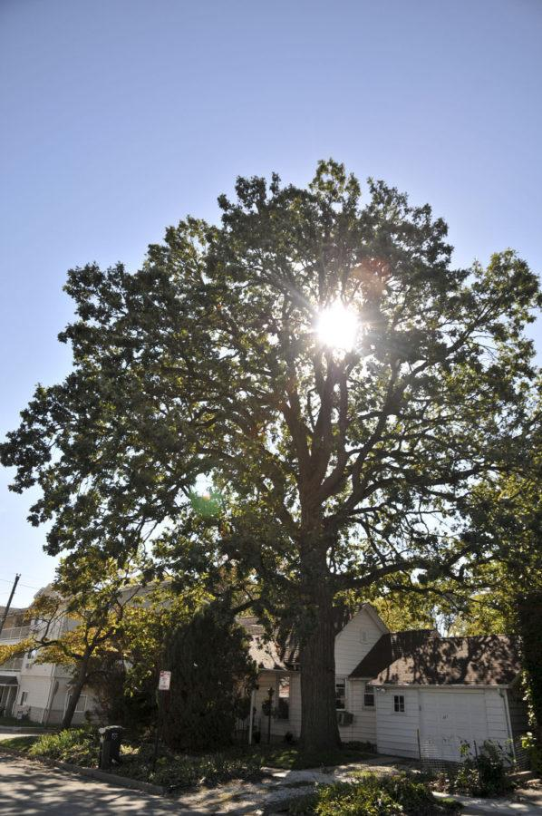 Light peeks behind the first living Legacy Tree, a bur oak, is located at 301 Griggs St. in Urbana. Students now have an extra hour to sleep because of daylight saving time.