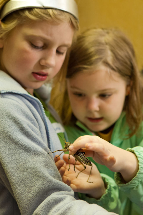 Two students examine an insect from one of the entomology exhibits at the Naturally Illinois Expo in 2013.