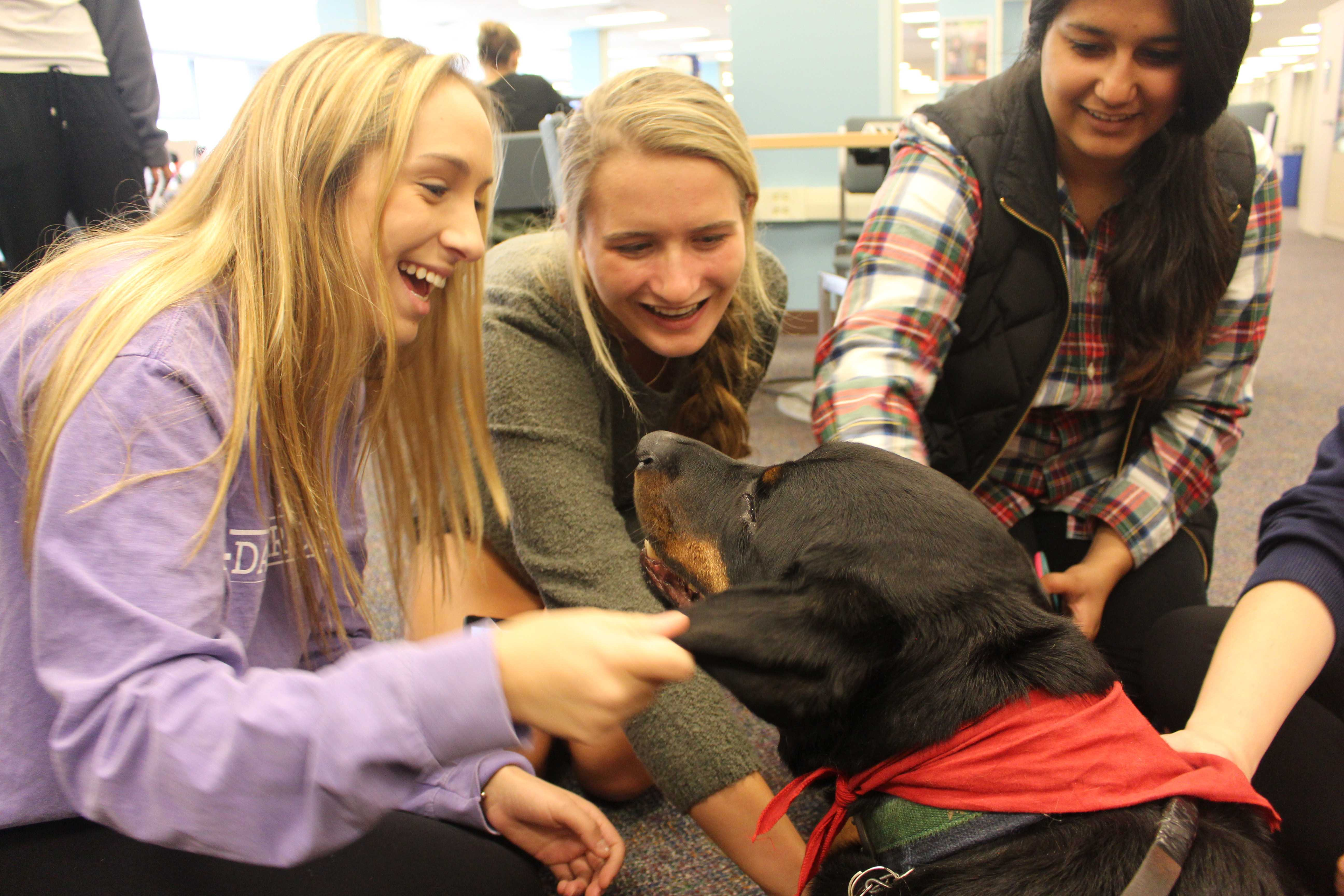 %3Cp%3EVolunteer+therapy+dogs+and+their+owners+visit+campus+libraries+to+help+students+relieve+stress+during+finals+week.%3C%2Fp%3E