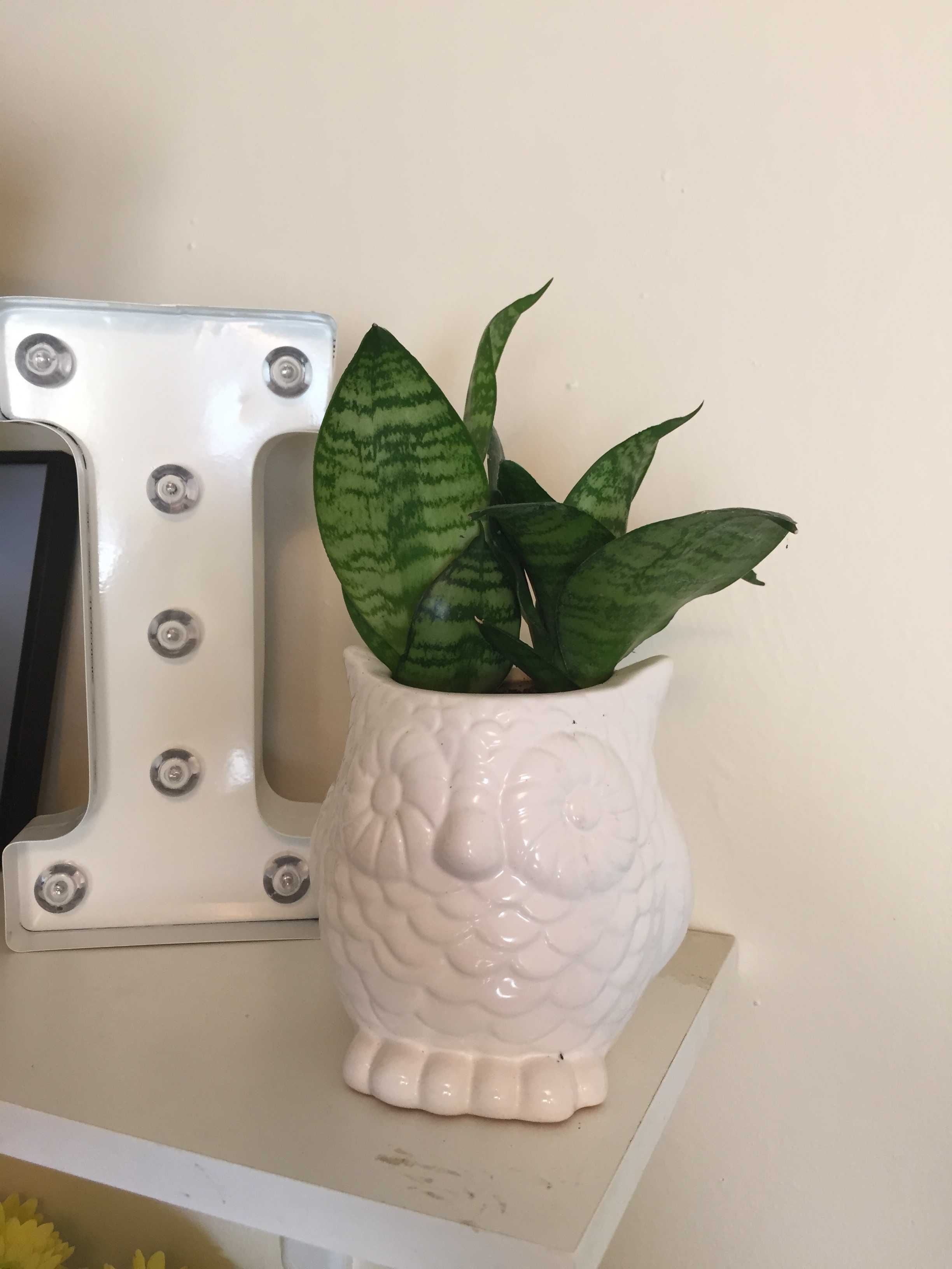 Houseplants+are+a+beautiful+addition+to+any+dorm+or+apartment+and+can+be+cared+for+relatively+easily.+These+tips+will+help+them+flourish.%26nbsp%3B