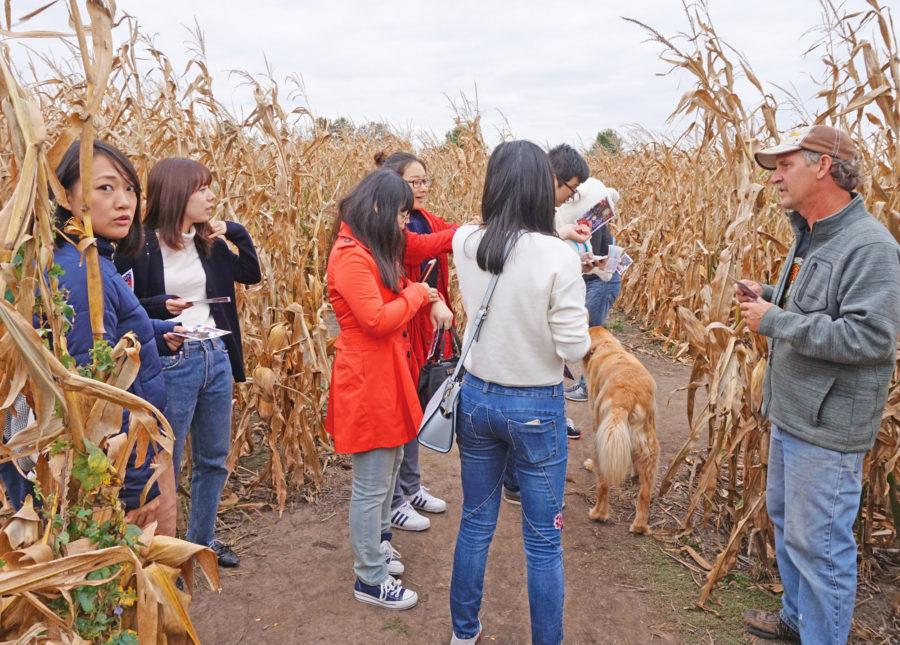 A group of tourists, asking for route in the corn maze on Friday, Oct.9