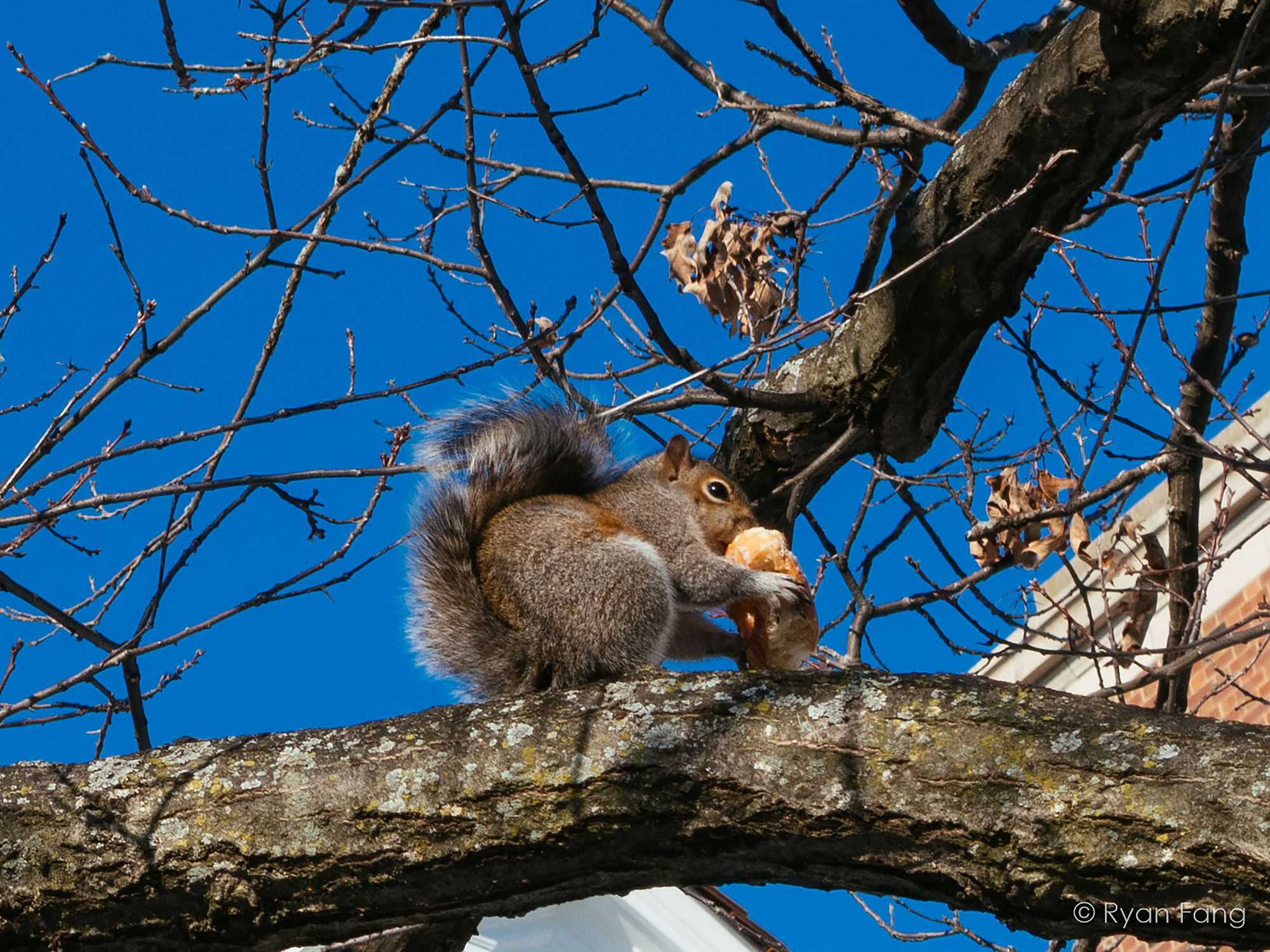 A squirrel eats donut near the Anniversary Plaza on Friday, Mar 6 2015.