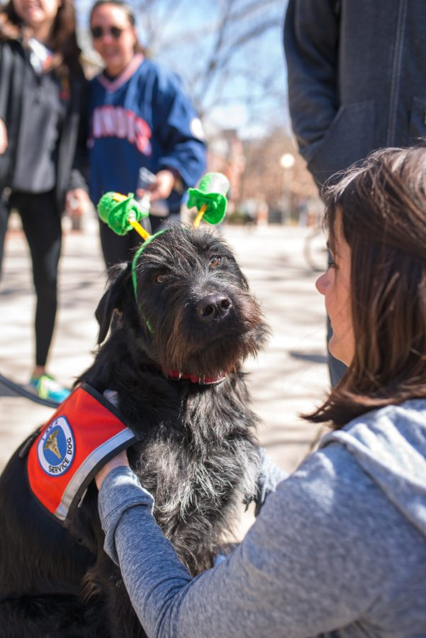 Busey smiles for the camera as she enjoys the company of Mary Kate Feldner, sophomore in LAS, during the Pat-the-Pup event hosted by the Illini Service Dogs at the Main Quad on Tuesday, March 17, 2015.