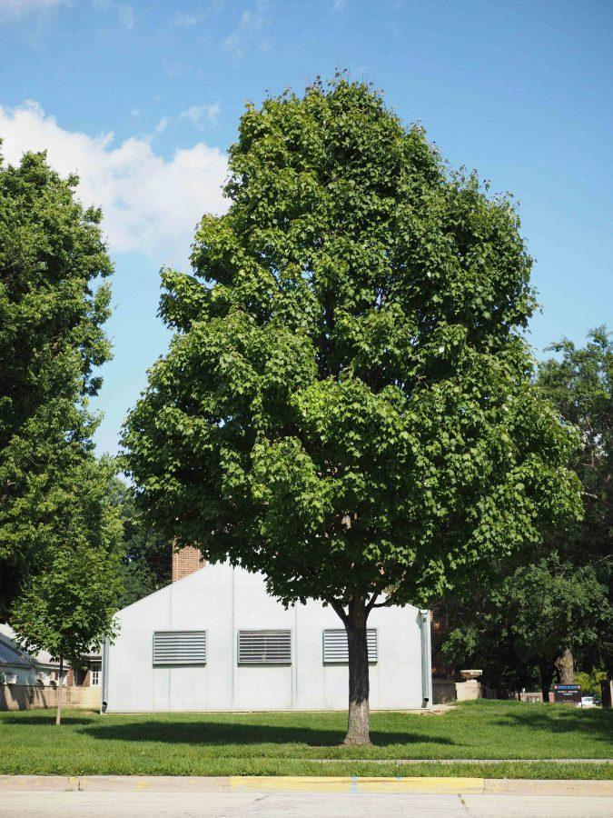 85 new trees will be donated to the Urbana Cooperative Tree Planting Program by The Rotary Club of Urbana.