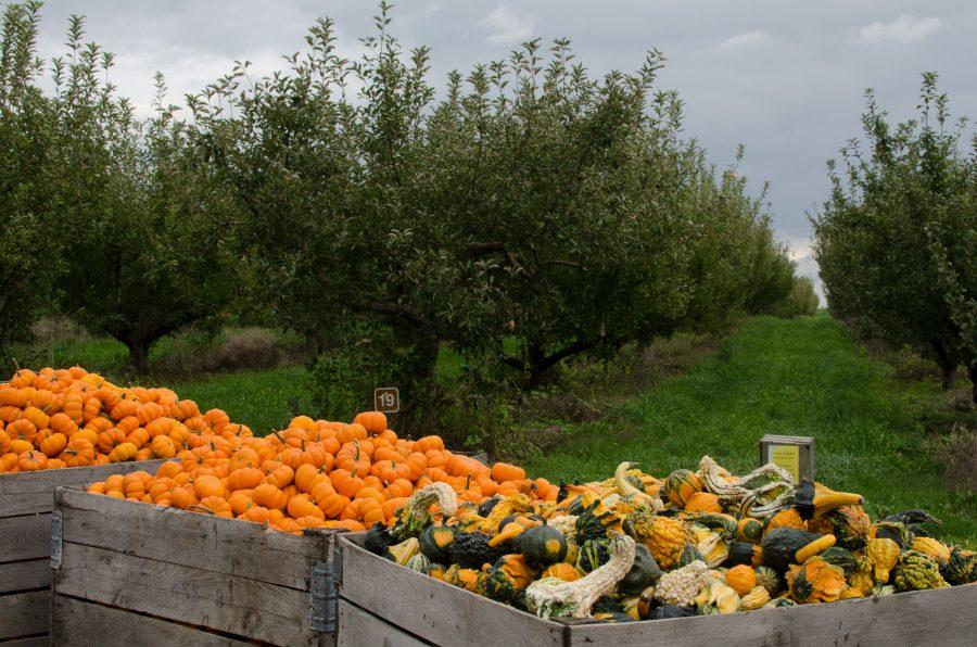 Containers+filled+with+squash+and+pumpkins+at+Curtis+Orchard+%26+Pumpkin+Patch+during+the+fall.+Buzz+editor+Elani+writes+about+interesting+spots+students+can+visit+off-campus.