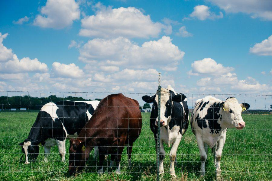 USDA investigates University over animal deaths