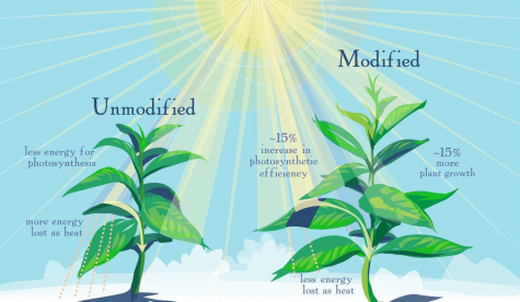 University scientists discover photosynthesis research to improve plant production