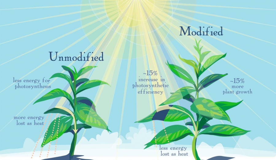 The Daily Illini : University scientists discover photosynthesis ...