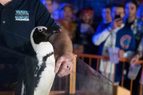 Letter to the Editor: Having a penguin at a bar was wrong