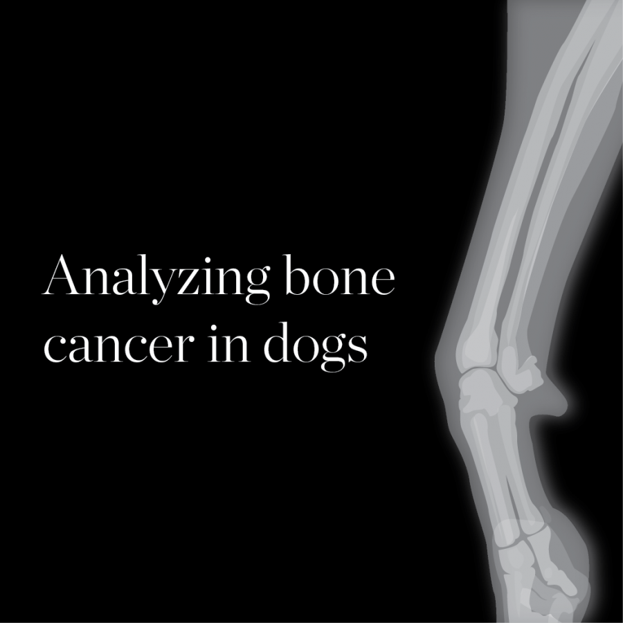 Analyzing Bone Cancer In Dogs The Daily Illini