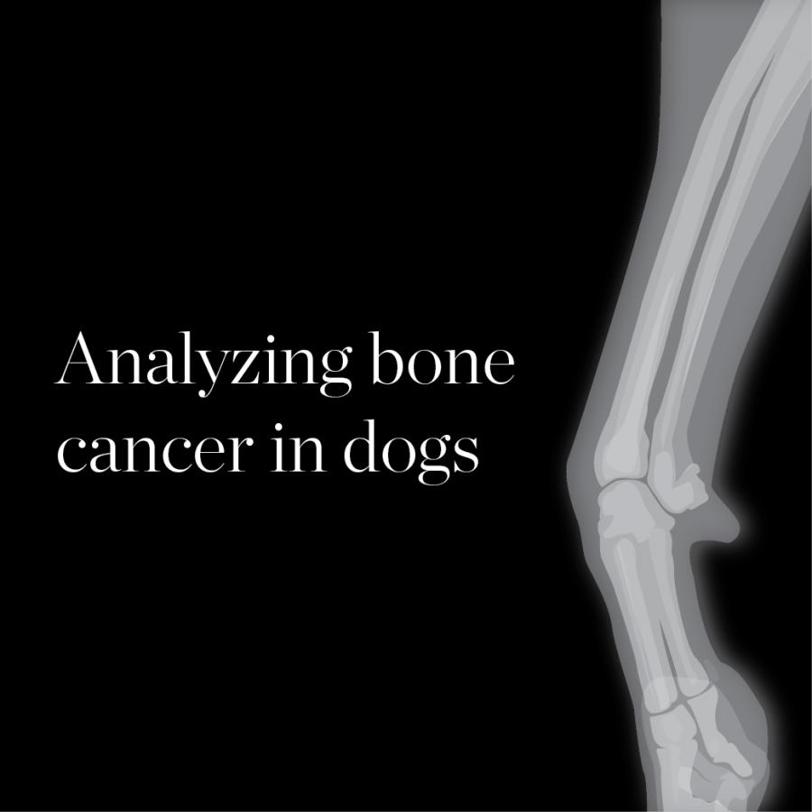 Analyzing bone cancer in dogs