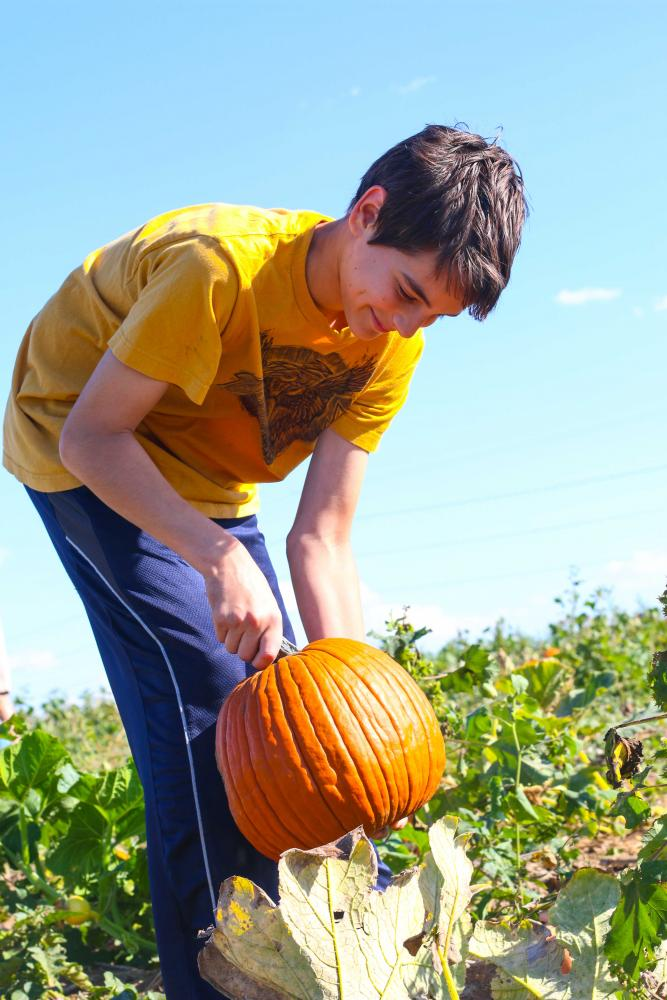 Illinois is the top producer of pumpkins, which can be used for decoration and  cooking.