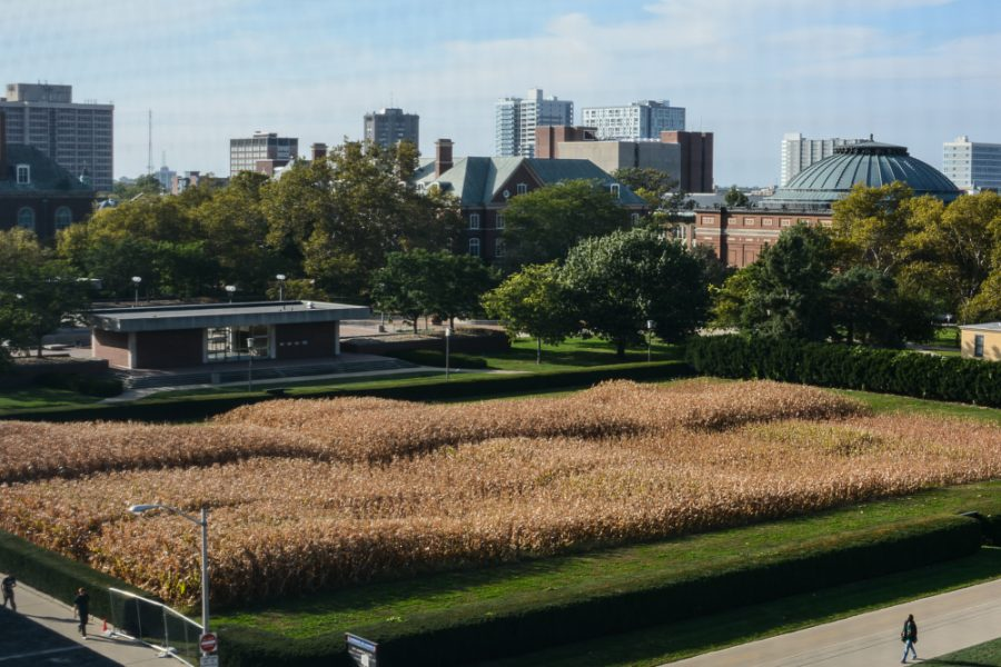 Corn+grows+on+the+Morrow+Plots+on+Oct.+5%2C+2015