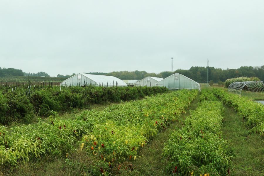 The+Sustainable+Student+Farm+is+located+on+S.+Lincoln+Ave.+in+Urbana.+Wednesday%2C+Oct.+11.+The+farm+serves+the+University+and+surrounding+communities.