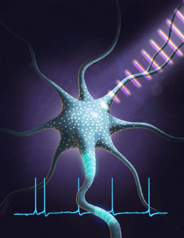University researchers control neurons with light