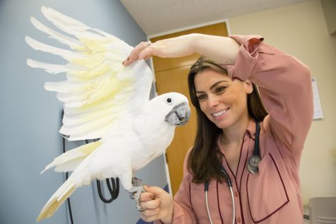 University professor receives veterinary medicine award