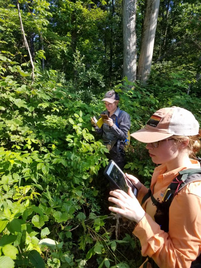 Graduate student Melissa Daniels and her technician Amanda Neibuhr survey a forest site hit by the 2017 tornado in southern Illinois.