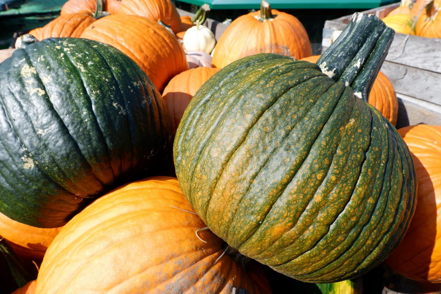 Illinois saw a record-breaking pumpkin yield ahead of fall festivals this year due to ideal weather prolonging the growing season.