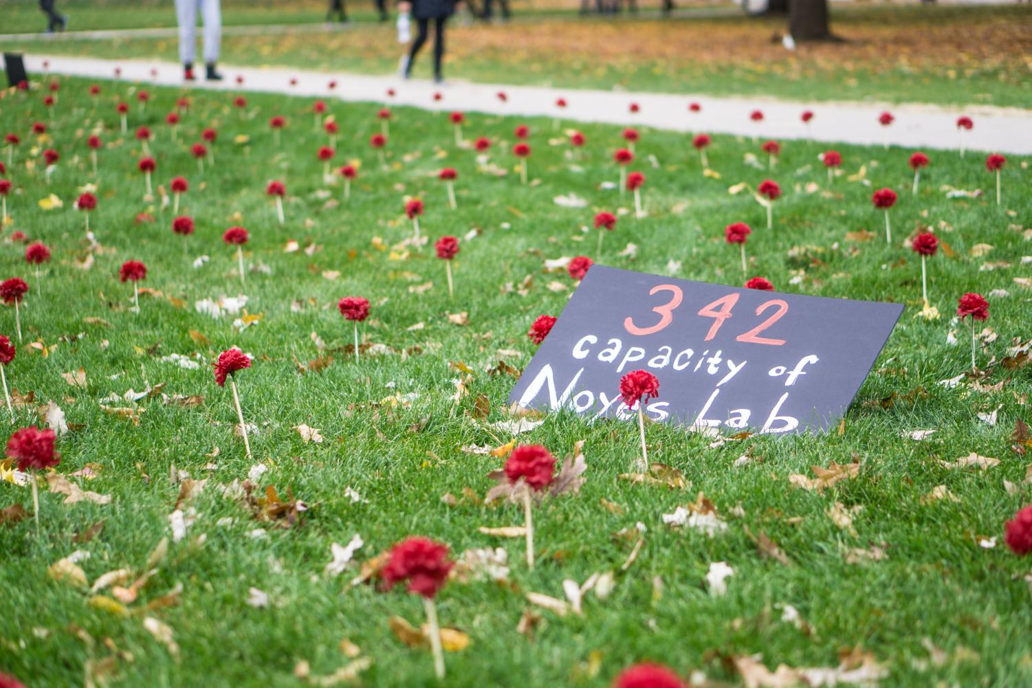 Carnations+and+signs+set+up+by+Amnesty+International+line+the+Main+Quad+to+raise+awareness+for+gun+violence+on+Thursday.