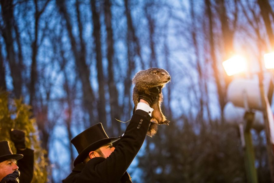 Punxsutawney+Phil+is+raised+into+the+air+on+Groundhog+Day+in+Punxsutawney%2C+Pennsylvania.+According+to+ancient+German+traditions%2C+if+the+groundhog+comes+out+of+his+hole+and+does+not+see+his+shadow%2C+spring+will+come+early.+