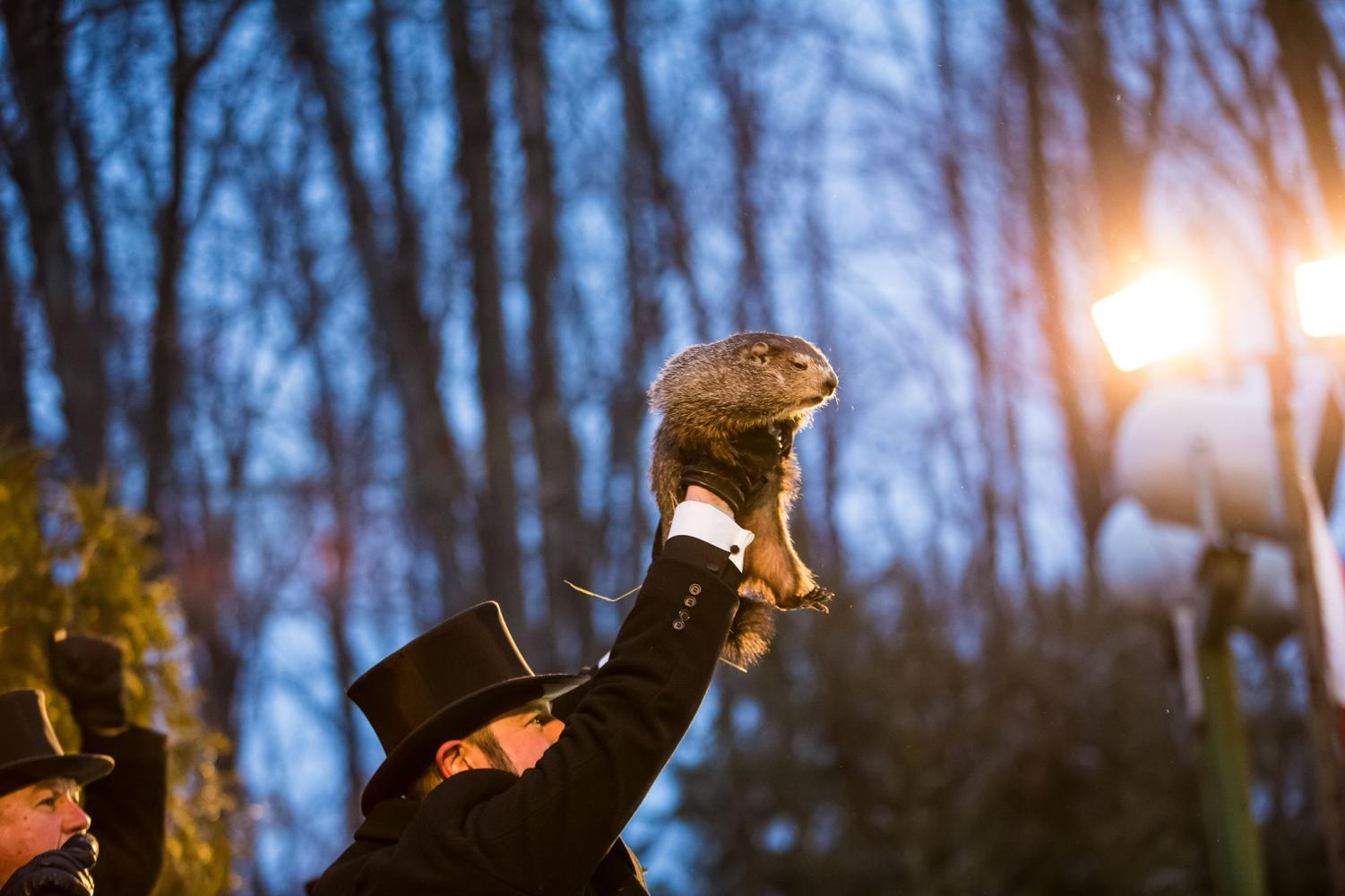 Punxsutawney Phil is raised into the air on Groundhog Day in Punxsutawney, Pennsylvania. According to ancient German traditions, if the groundhog comes out of his hole and does not see his shadow, spring will come early.
