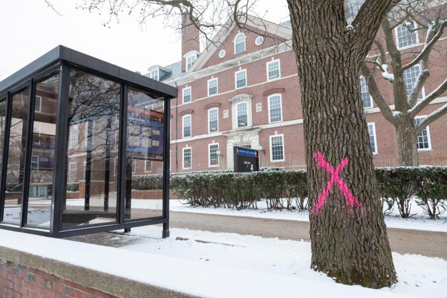 A+total+of+42+trees+were+marked+with+bright+pink+%E2%80%9CX%E2%80%9Ds%2C+signaling+they+will+soon+be+removed.