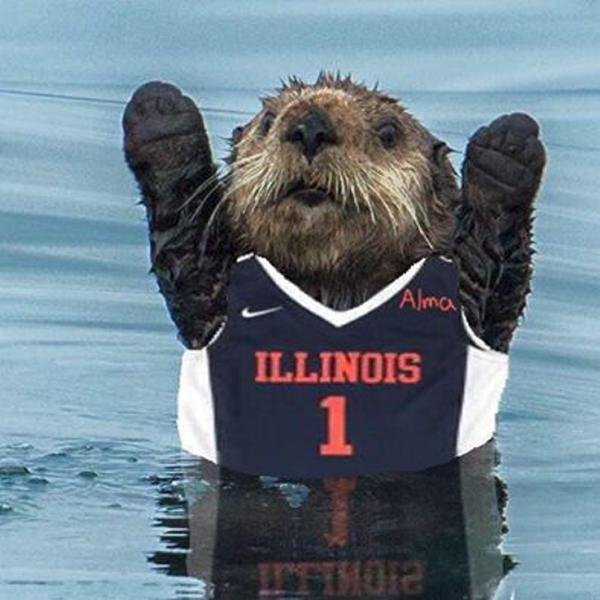 """A popular online image which has received plenty of attention, the otter sports an Illini jersey as advocacy for the """"Alma Otter"""" to become a University symbol gains traction."""