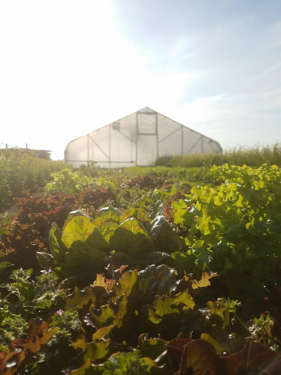 The Blue Moon Farm in Urbana grows vegetables for local farmer's markets, restaurants and stores. The farm consists of 20 acres dedicated to vegetable production, and 10 high tunnels totaling just under half an acre of year-round production.