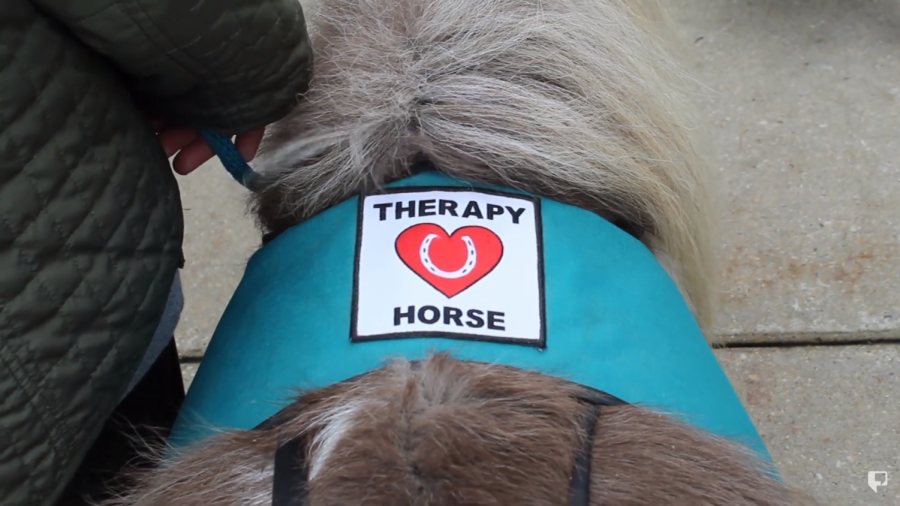 Native American House hosts therapy horses