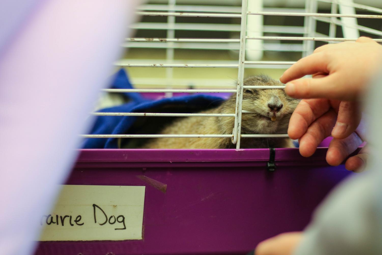 Furry+friends+come+to+Champaign+Public+Library