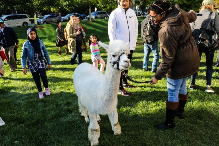 Harley the alpaca stands outside the Champaign Public Library as visitors walk up to pet its fur. Inside the library, a variety of animals were on display including, clockwise from top right, a chinchilla, a duck, a blue-tongued skink, a tortoise, a dove and a prairie dog.