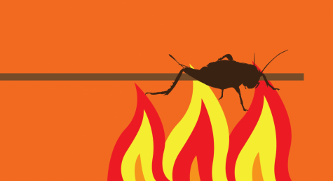 This Christmas, try roasting crickets over an open fire