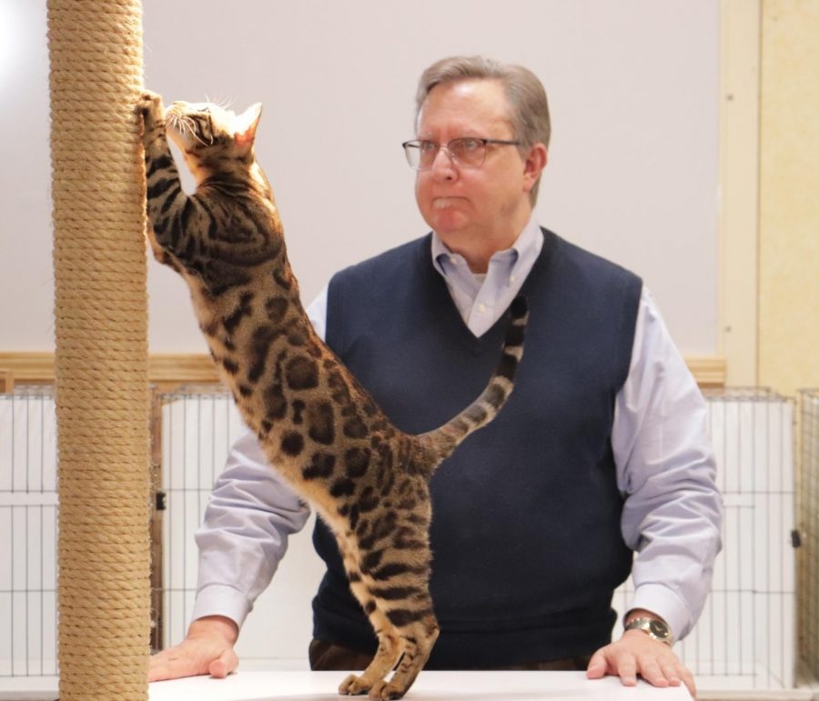 Judge+Jeff+Janzen+considers+a+cat+while+conducting+the+all+breed+competition.+