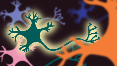 Targeted gene therapy slows ALS progression in mice