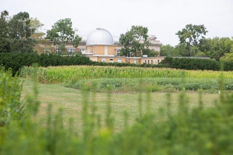 Corn grows in the Morrow Plots on Sunday. The Crop Science department will host their annual Agronomy Day as a virtual event this year.