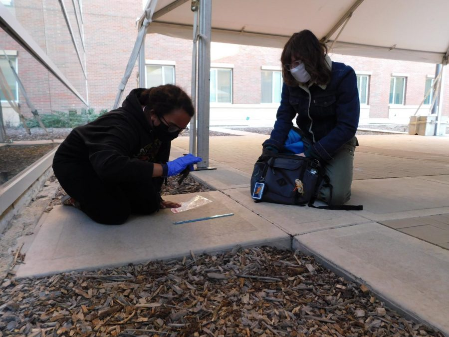 The Wildlife Society UIUC student chapter Vice President Izabelle Jaquet (left) and chapter President Emmarie Alexander (right) participate in the bird collection survey.