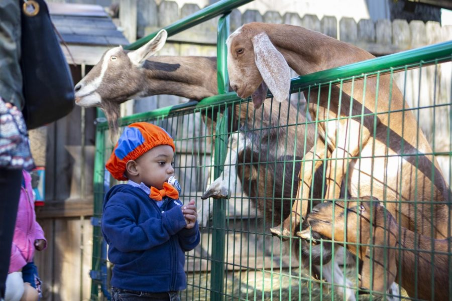 A child feeds goats at Curtis Orchard and Pumpkin Patch on Oct. 31. The Orchard Downs Preschool has struggled to overcome challenges that have come with the COVID-19 pandemic.