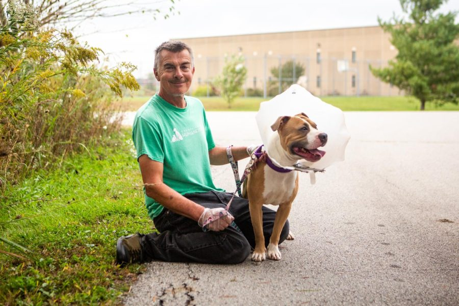 Champaign County Humane Society (CCHS) volunteer Joe Domain poses for a photo outside with Foster, an American Pit Bull terrier mix, after their morning walk Oct. 11. The CCHS is gradually restarting their volunteer program after the heat of the pandemic.